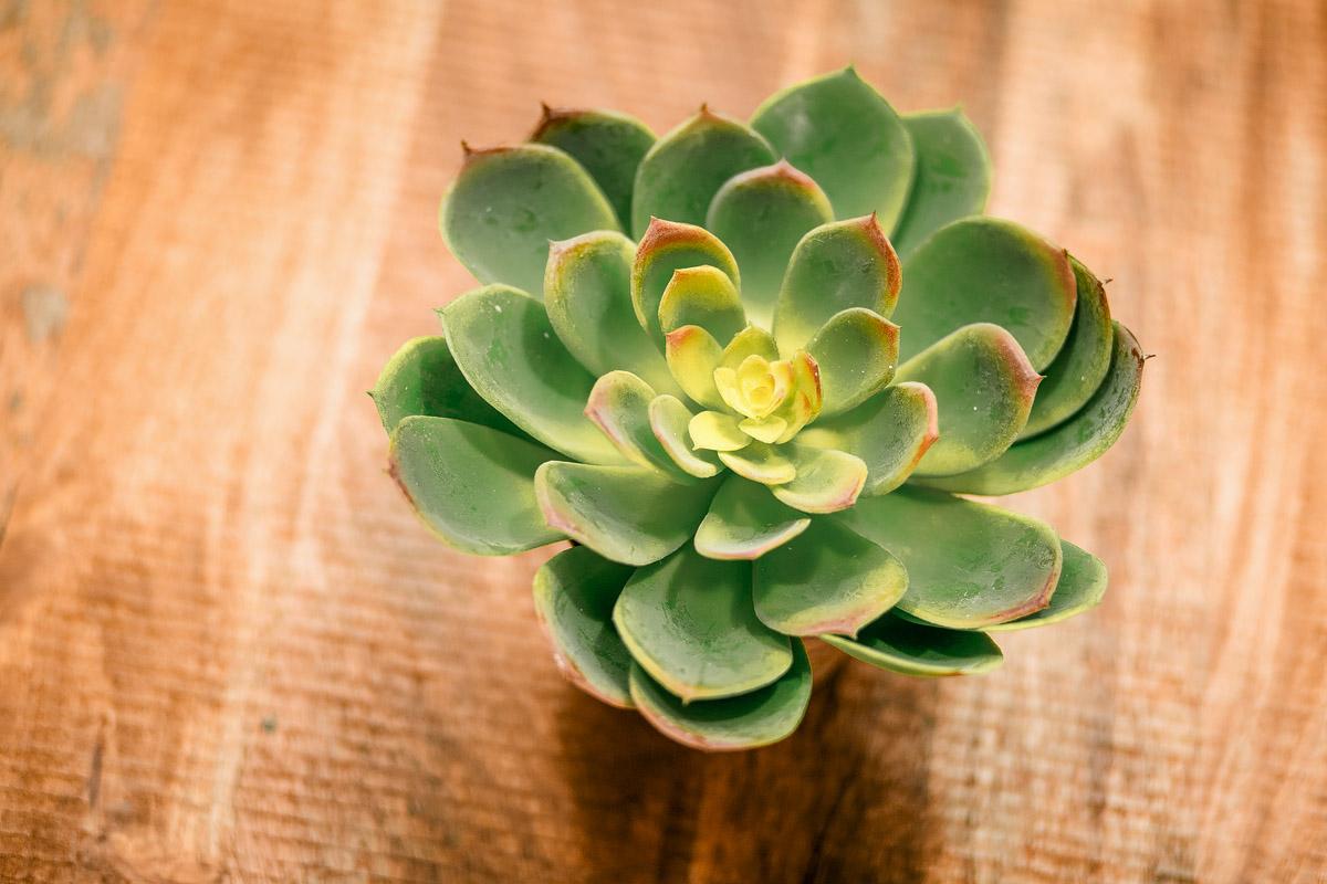 Pflanze 1, mietstudio dresden, fotostudio dresden, freiraum 140